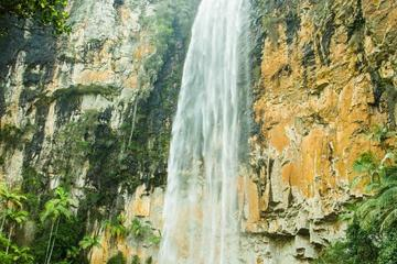 Springbrook National Park Hiking Tour...