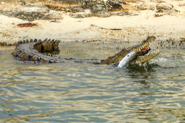 Crocodile Adventure Boat Tour in Cancun
