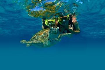 Excursión privada: buceo de superficie con tortugas marinas en Akumal...
