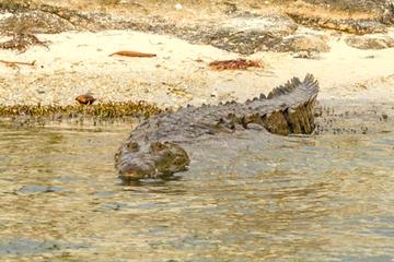 Excursión privada para ver cocodrilos desde la Riviera Maya