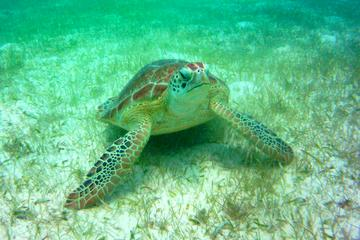 Private Tour: Akumal Marine Turtle...