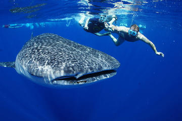 Private Tour: Whale Shark Adventure with Isla Contoy Visit