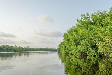Tour privado: fauna y flora de la laguna Nichupte desde la Riviera...