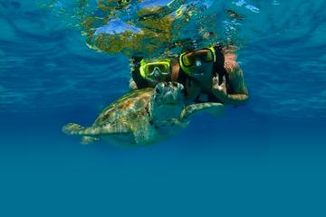 Visite privée: plongée avec masque et tuba tortue marine à Akumal et...