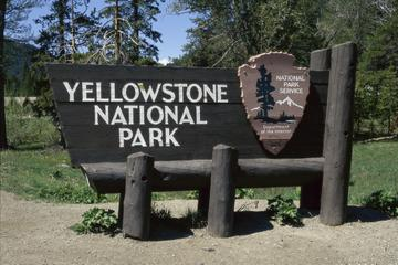Book Yellowstone Upper Loop Self Guided Driving Tour from Jackson Hole on Viator