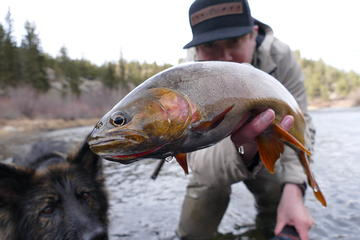 Full-Day Small-Group Fly Fishing Tour ...