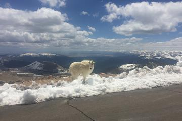 Mt Evans Drive from Denver: Scenic Mountains and Mining Towns