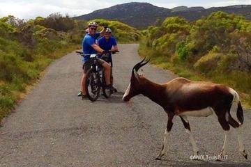 Private Radtour zum Cape Point von...