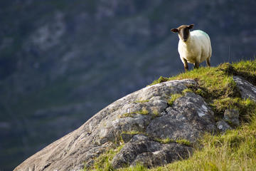 The Ring of Kerry and Dingle - 2 Day Travel Pass
