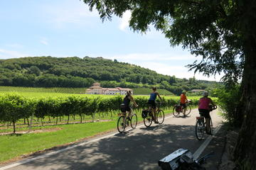 Organic wine tour by bike