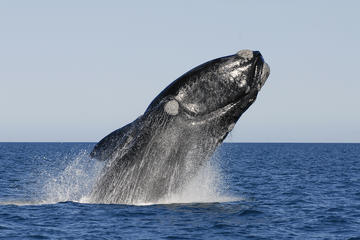 Journée complète à Hermanus Whale Route...