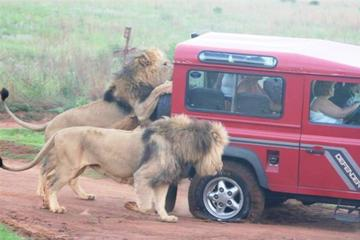 Mini Safari Tour from Durban