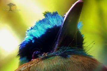 Excursión de observación de aves en Monteverde