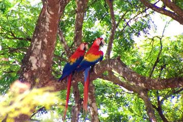 Private Tour: Carara National Park Bird Watching Tour