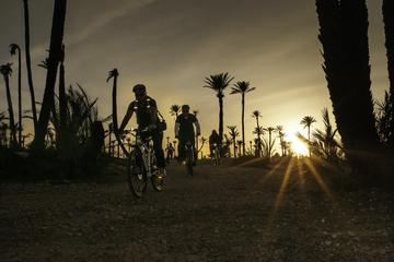 The Palmery Off-Road Bike Tour from...