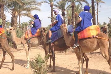 Excursion d'une demi-journée à dos de chameau à la palmeraie de...