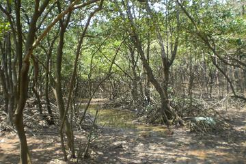 Excursion écologique d'une journée à Can Gio au départ de...
