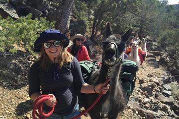 Ta en lama til lunsj! Wilderness Day...