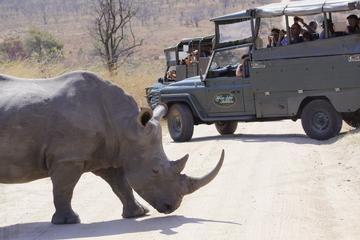Dagtour naar Kruger Park in een open safarivoertuig vanuit Hazyview