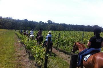 Excursão vinícola - Excursão com passeio a cavalo pelas vinhas