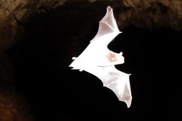 Visita nocturna a la selva en Puerto...