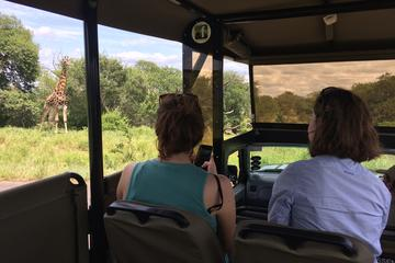 Morning Safari in Kruger Park from Hazyview