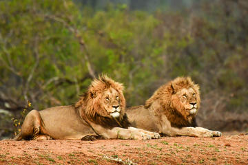 Private Full-Day Guided Safari Tour from Hazyview