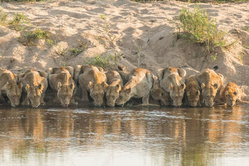 Private Full-Day Guided Safari Tour ...