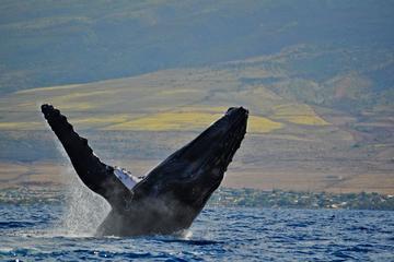 Maui Island Whale Watch Adventure by...