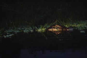 Excursión nocturna de avistamiento de...
