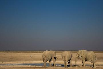 3-Day Etosha National Park Tour from...