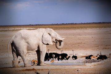 4-Day Etosha And Swakopmund Adventure...
