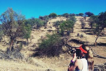 Small-Group Morning Hike at Daan...