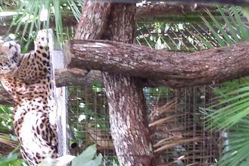 Belize zoo and jungle jeep safari