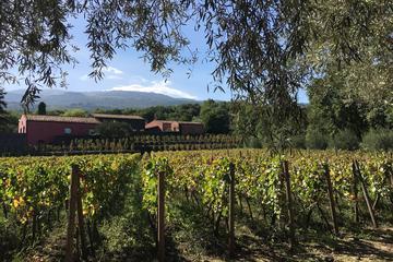 Visite des vignobles du Mont Etna au...