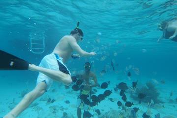 Experiência no Stingray City e duas paradas para mergulho com snorkel