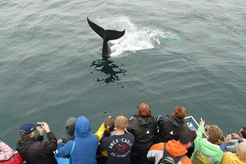 Newfoundland Puffin and Whale Watch...