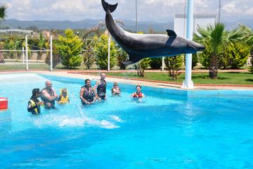 Swim with Dolphins in Alanya