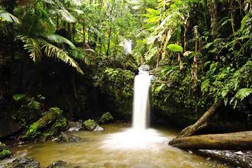Aventura de senderismo en la selva tropical de El Yunque