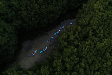 Bioluminescent Bay Kayak Adventure...