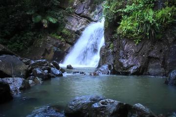 Caminata guiada por la selva tropical El Yunque con excursión a una...
