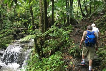 El Yunque National Forest Half Day...