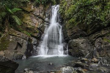 El Yunque National Forest Tour from...