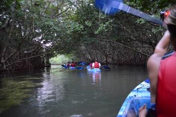 Excursión en kayak con fondo de cristal a la Bahía Bioluminiscentes...