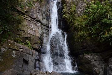 Excursion combinée: marche dans la forêt tropicale El Yunque et baie...