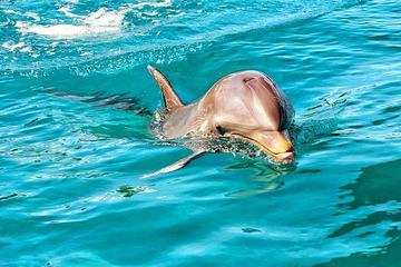 Circuit découverte de la nature: dauphins, tortues géantes...