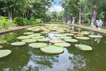 Excursion privée d'une journée au nord de l'Île Maurice: jardins...
