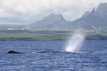 Full-Day Mauritius Marine Discovery Tour with Snorkelling from Grand...