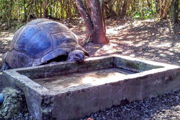 Mauritius History and Eco Tour: Ile aux Aigrettes Nature Reserve...
