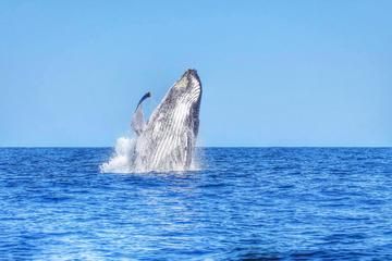 Nage avec des dauphins sauvages et observation des baleines
